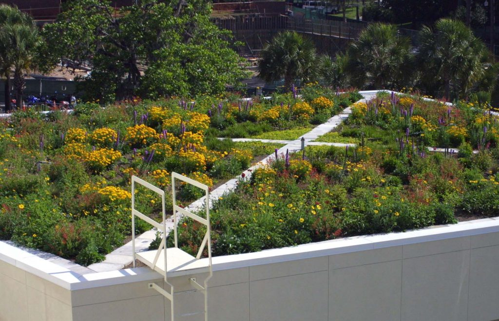 Perry Yard's green roof in bloom